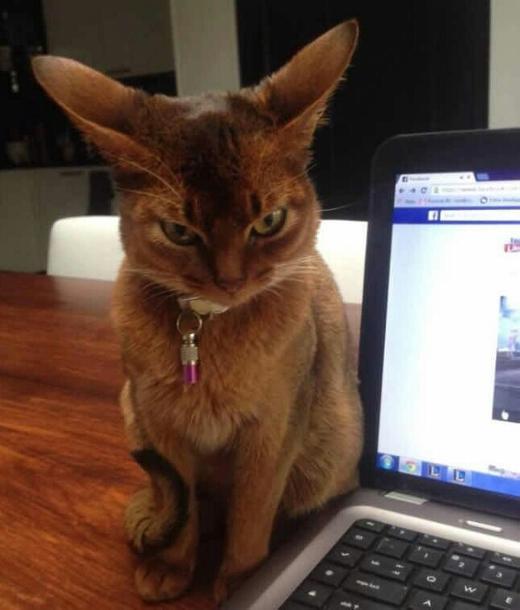 смешной кот разозлился