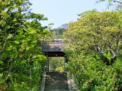 東慶寺の新緑