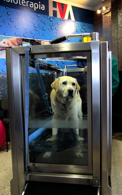 los amigos  Artrite em cães Causas e Tratamento