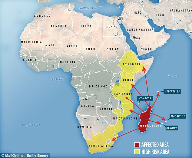 War news updates plague fears grow in africa as the black death plague fears grow in africa as the black death continues to spread gumiabroncs Choice Image
