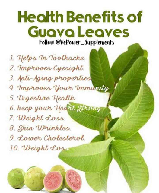 Top 10 Health Benefits of Guava Leaves