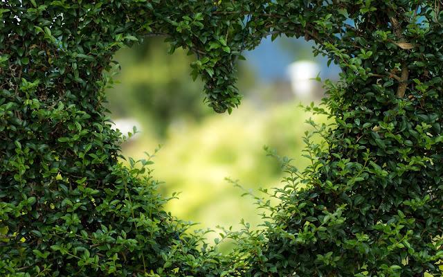 green-love-valentine