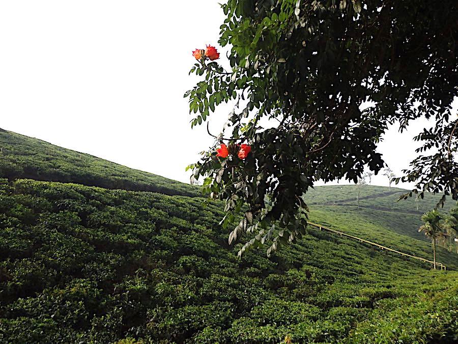 Indien datant du Kerala site