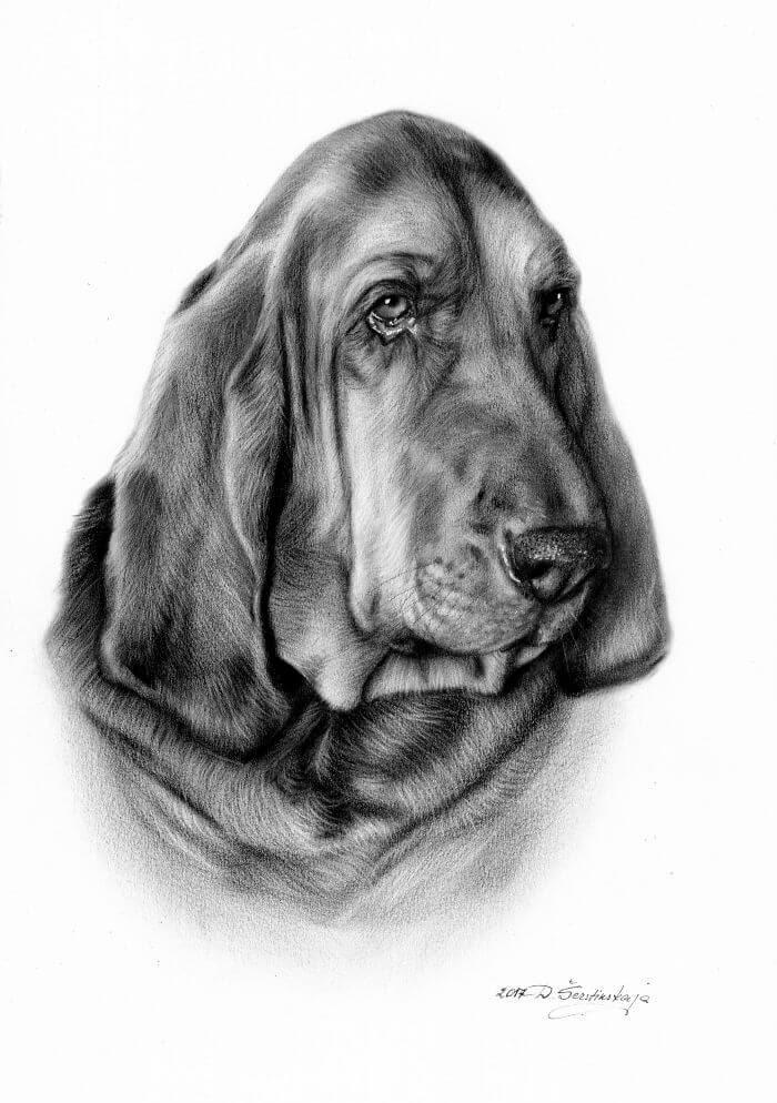 12-Bloodhound-Danguole-Serstinskaja-Animal-Dry-Brush-Technique-Paintings-www-designstack-co