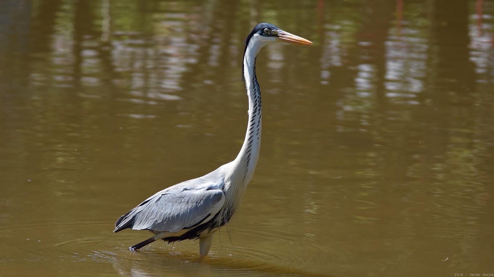 birds of southeast brazil