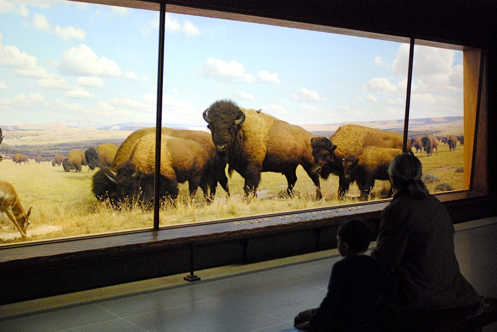 American Museum Of Natural History On Monday