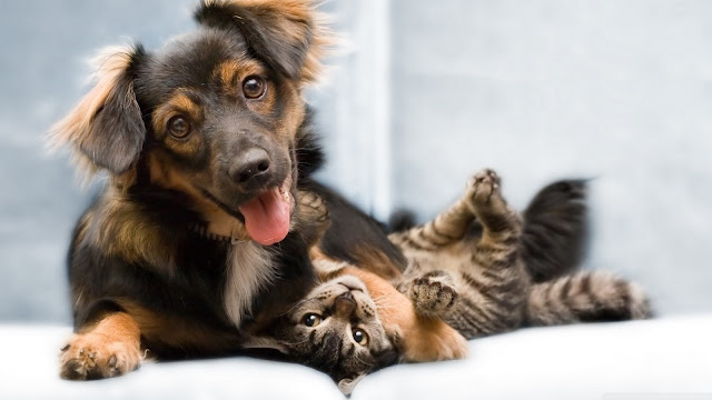 Cat and Dog Wallpaper 8