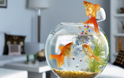 Fishes and Aquariums Wallpapers