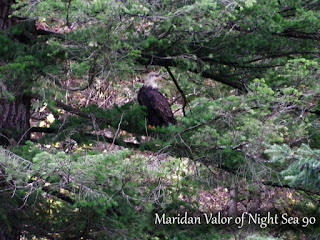 Bald Eagle In The Rain; check out more on the blog.