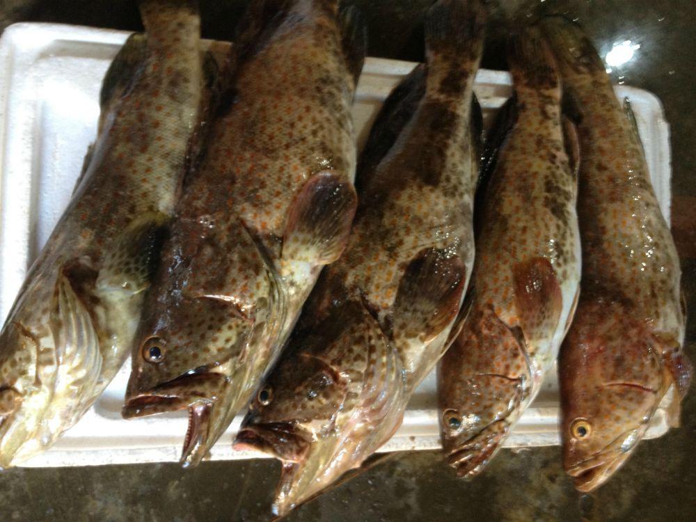 Frozen Grouper Fish, Grouper Fish Wholesale, Grouper Fish for Sale