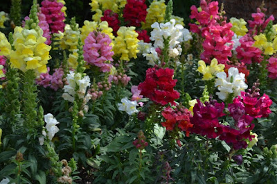Universal Studio Flower Photos