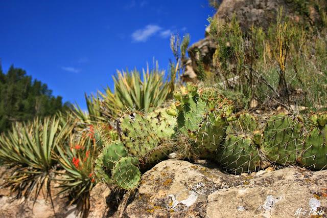 M-ii Photo : Walnut Canyon National Monument