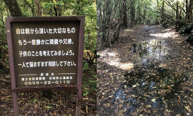 Hutan Aokigahara, Jepun
