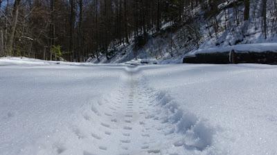 Fattie-Spur im Schnee bei der Hinteregg