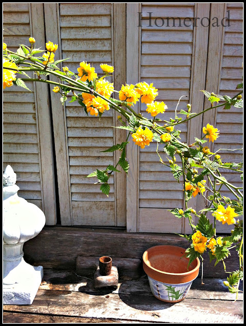 Shutters with pots and yellow flowers
