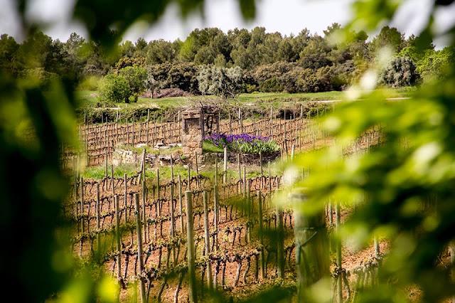 Mas de Torubio, Cretas, Queretes, Matarranya, Matarraña, pozo, pou, finca, vino, uva, vid, vides