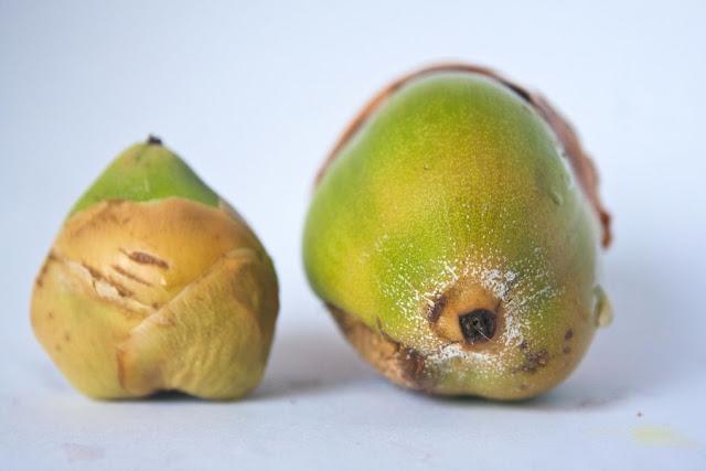 Los Pistachos, un fruto seco con muchas virtudes