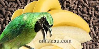 Voer yang Dianjurkan Untuk Makanan Burung Cucak Hijau Jawara