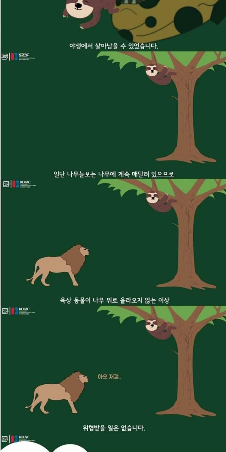 나무늘보가 멸종하지 않는 이유