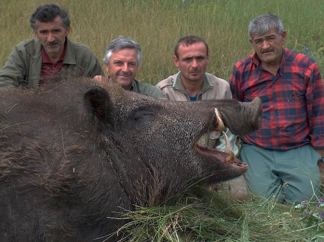 redbirddog - a hungarian pointer (vizsla) blog: Don't ... Giant Wild Boars In Asia