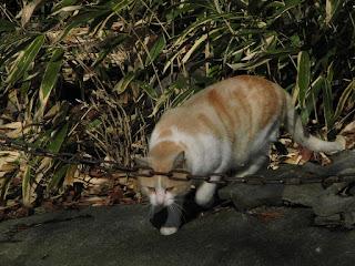 猫の初詣 眼鏡をおでこに乗せているように見える