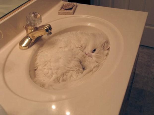 Muôn vàn kiểu chơi trốn tìm hài hước của các thánh mèo