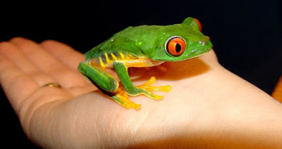 The means of survival of frogs in various environments testify of God's creative skill