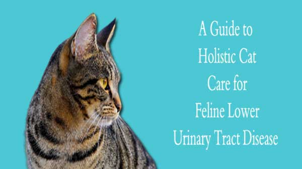 A Guide to Holistic Cat Care for Feline Lower Urinary Tract Disease