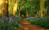 fonds d'écrans printemps forêt