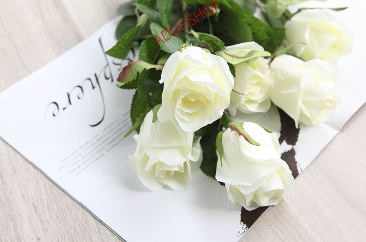 White Rose Flowers Wallpapers