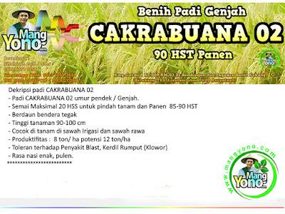 SUWARNO Lamongan, Jatim   Pembeli Benih Padi  CAKRABUANA 02 sebanyak 7 Kg.   dan   TRISAKTI 75 HST Panen.  15 Kg atau 3 Bungkus