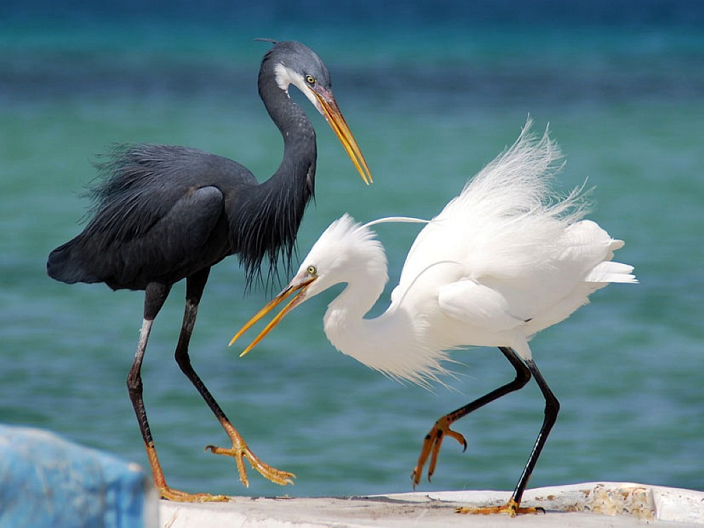 Cute Wallpaper Black And White Birds Big Birds Wallpapers Entertainment Only