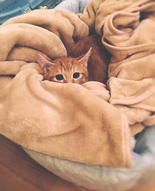 cat flu emporium pet shop fortitude valley vet sore eyes nasal discharge