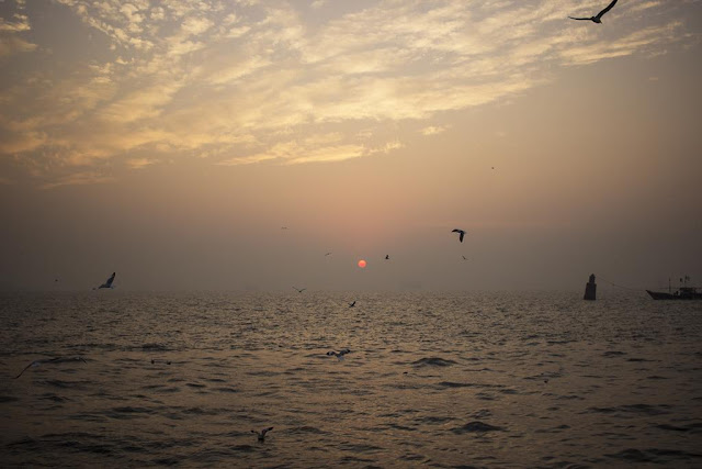 skywatch, sky, birds, boat, dawn, sassoon docks, mumbai, india, arabian sea,