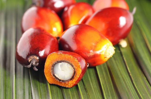 Frutti e Semi Palma da Olio