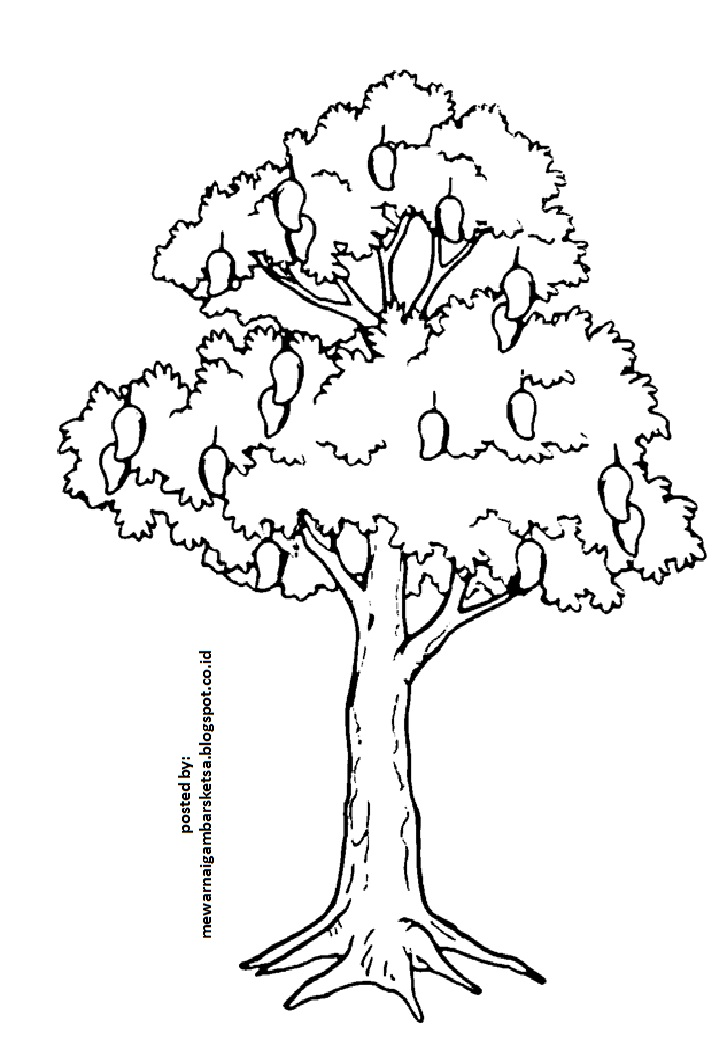Gambar Sketsa Pohon 3 Related Keywords Suggestions Gambar Sketsa