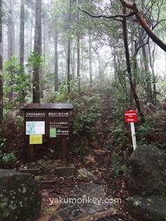 Mochomu trail, Yakushima