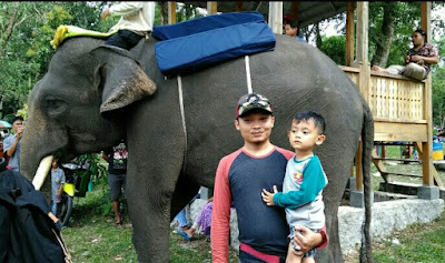 Gajah lampung di way kambas provinsi lampung sumatra