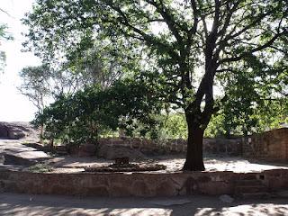 Bajo la sombra del roble descansan los restos de Athaualpa Yupanqui ,en su casa de Cerro Colorado