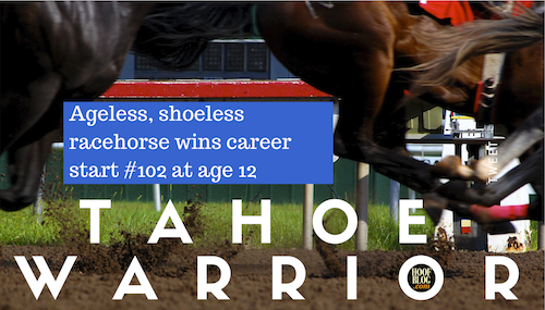 racehorse wins age 12 without shoes