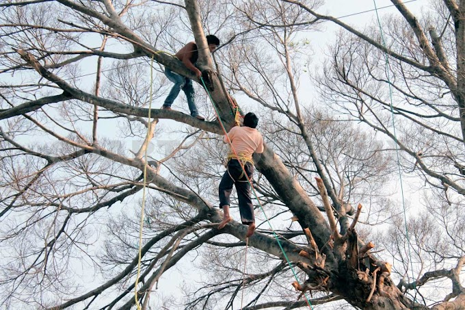 Se electrocuta al podar un árbol