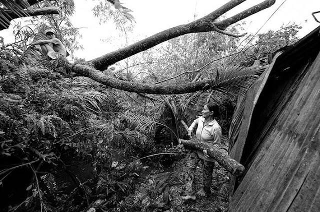 Bà Nguyễn Thị Hiền cùng các con cưa cây, dọn dẹp khu vườn tan hoang sau cơn lốc.