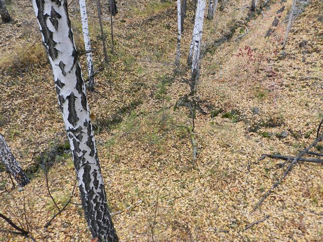 Пересекающиеся рвы в лесу под Кыштымом