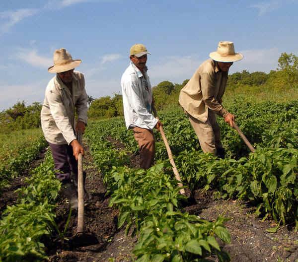 agricultura en venezuela pdf
