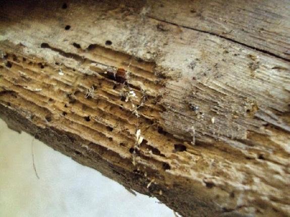 Odgrzybianie drewna, a korozja biologiczna elementów konstrukcyjnych więźby dachowej poddasza