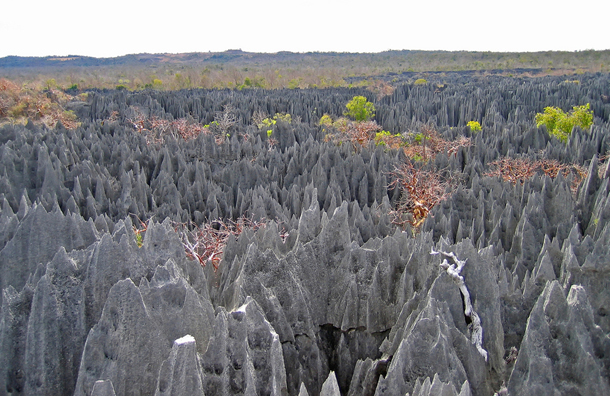 The Stone Forest, Madagascar