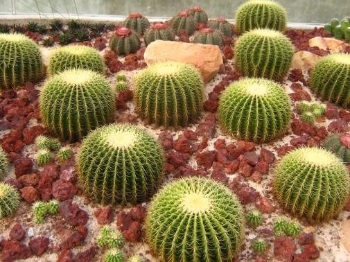 Garden Design Cactus Garden