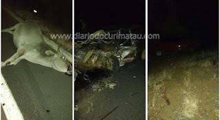 Acidente envolvendo animal deixa feridos na BR 104 próximo ao trevo de Cuité