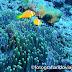 Buceo en Maldivas, ruta por los atolones del sur