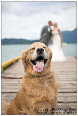 köpek evli çift